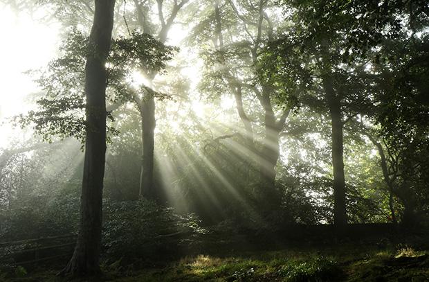 'Spiritual Sun Rays' by Sarah Stanton Longdon. Image 3 Large